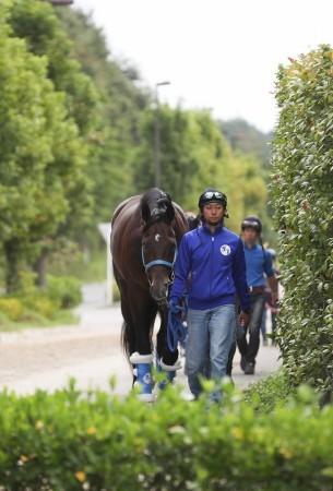 【競馬】サトノアラジン、元気いっぱいピンピンしてる