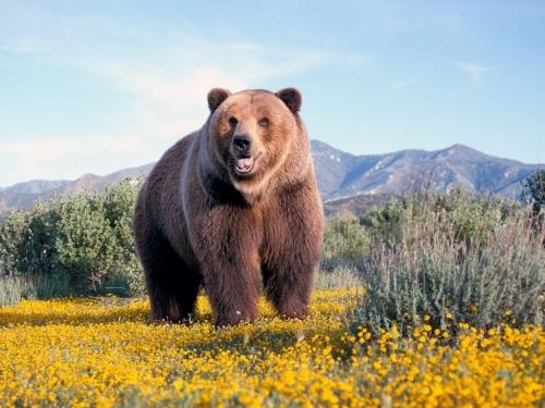 【競馬板】熊って人間に懐かないのかな?