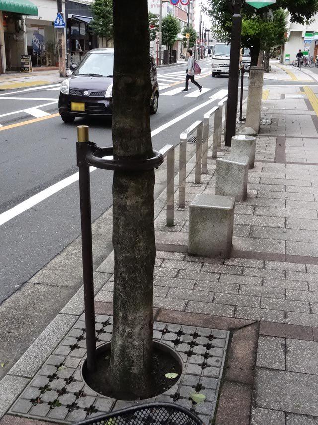 思い出の街路樹