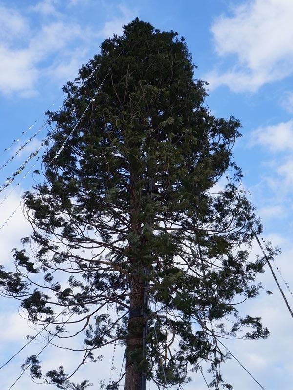メリケンパークのツリー