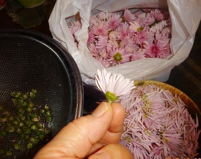 DSC09906菊を食べる
