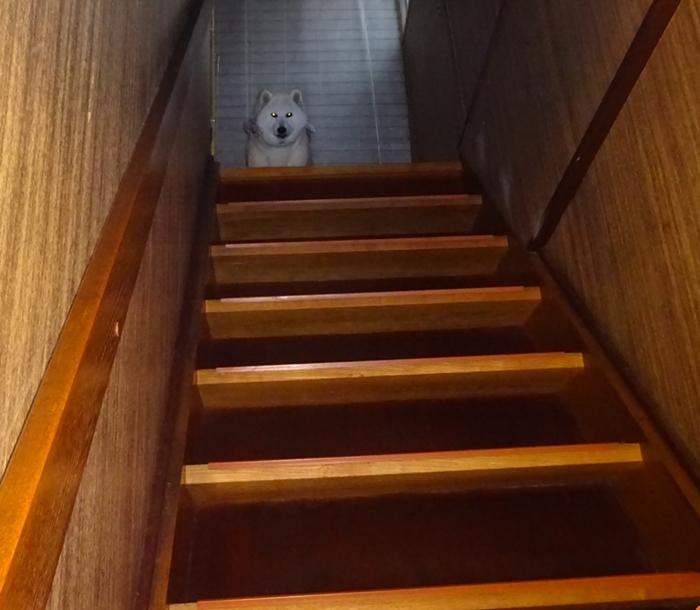 DSC00096階段の上から改めて見るカノン
