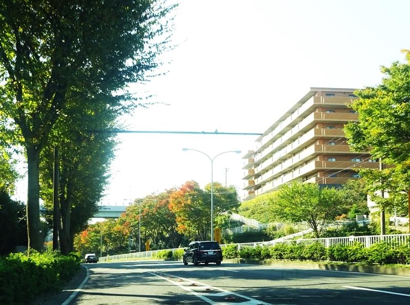 DSC00238秋の色の帰り道