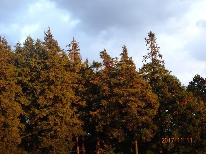 DSC00322ベランダから秋の森