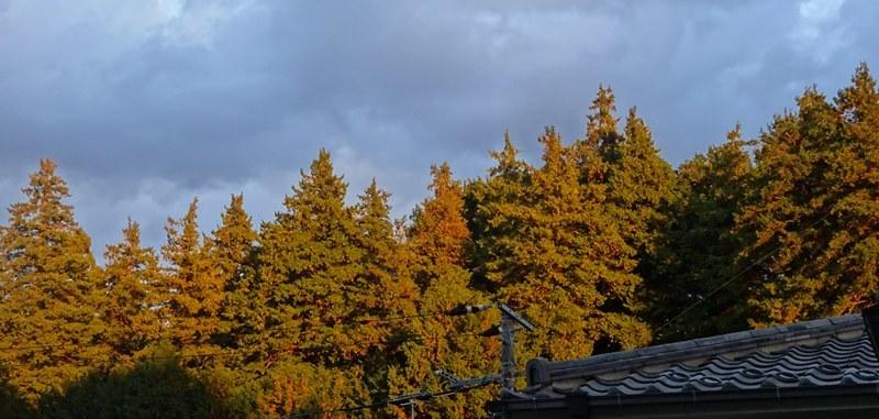 DSC00319ベランダから屋根の向こうに秋