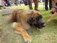 DSC00349大きな犬