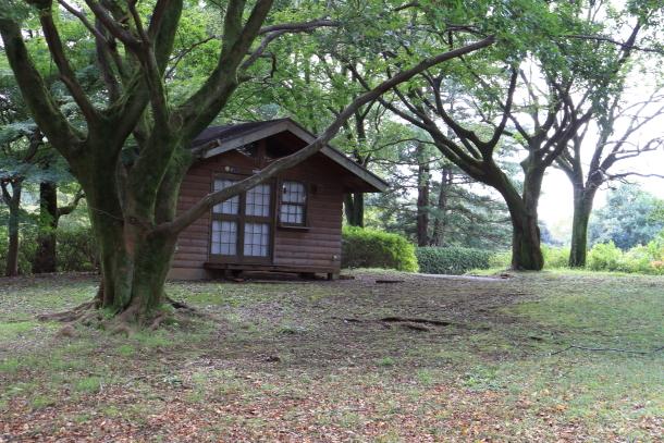 昭和記念公園 コスモス00028948