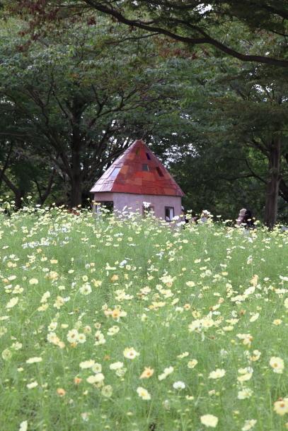 昭和記念公園 コスモス00028958