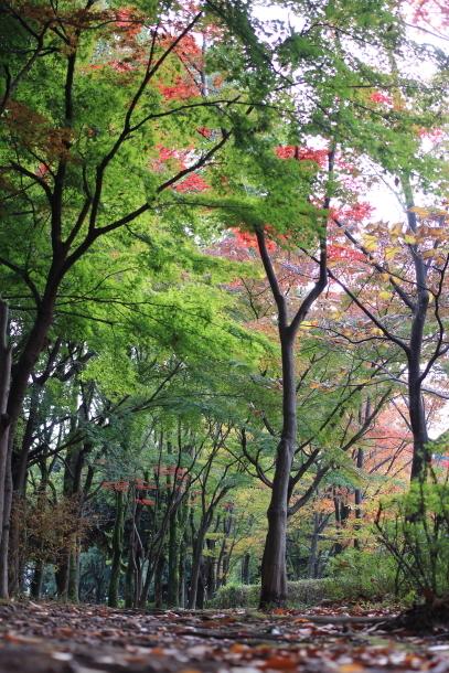 公園散歩 00031921