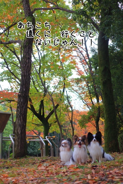 公園散歩 00031879