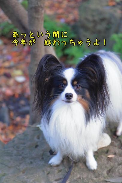せせらぎ公園00031978