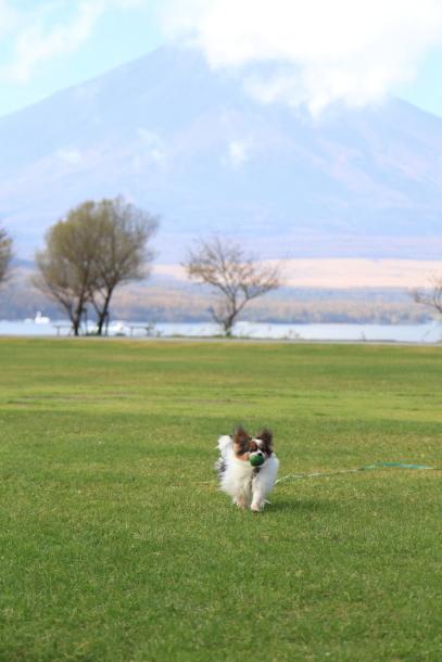 山中湖紅葉散歩00030019