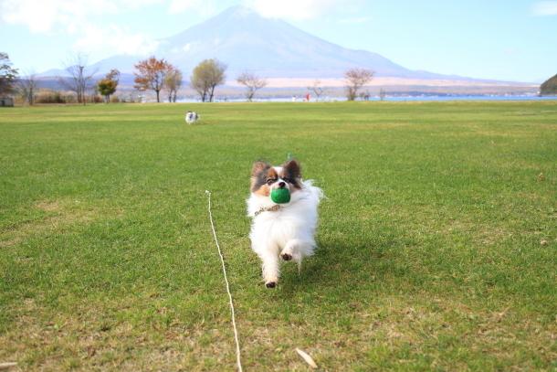 山中湖紅葉散歩00030029