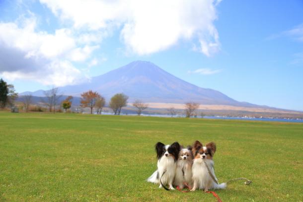 山中湖紅葉散歩00030010