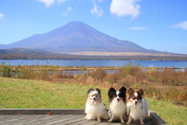 山中湖紅葉散歩00030047