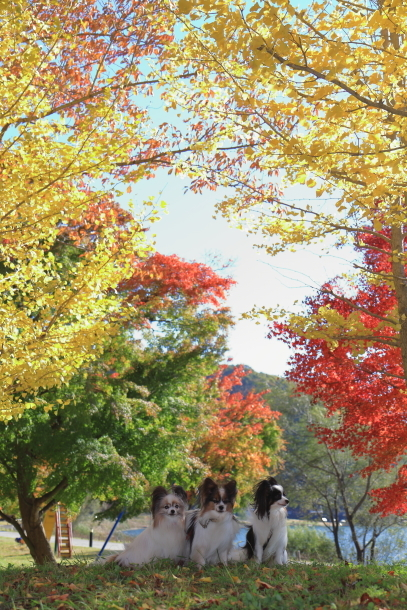 山中湖紅葉散歩00030174