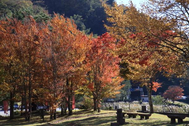 山中湖紅葉散歩00030177