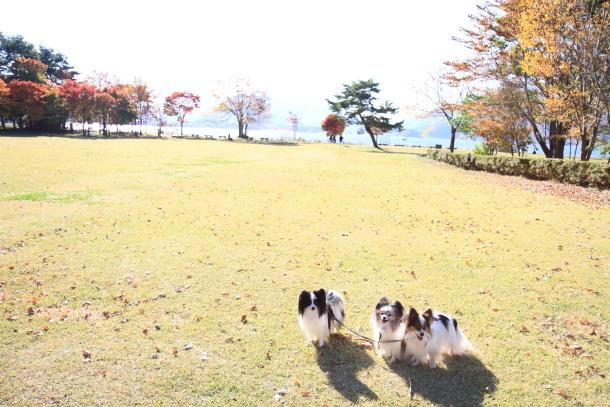 山中湖紅葉散歩00030180
