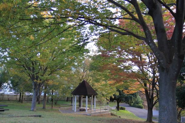 公園秋散歩00029753