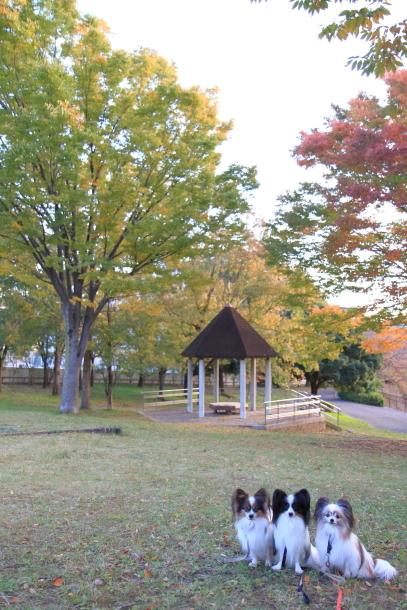 公園秋散歩00029756