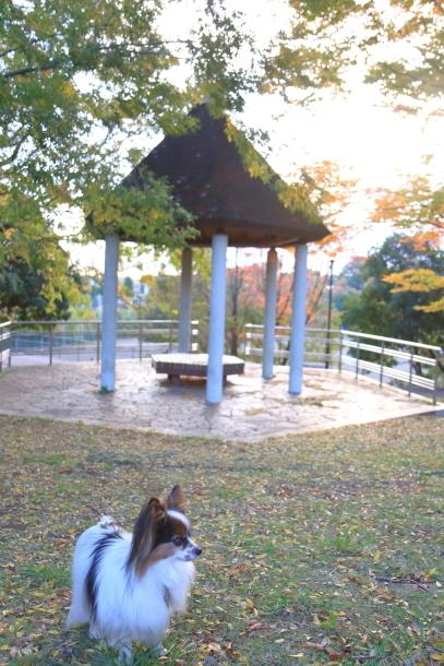 公園秋散歩00029761