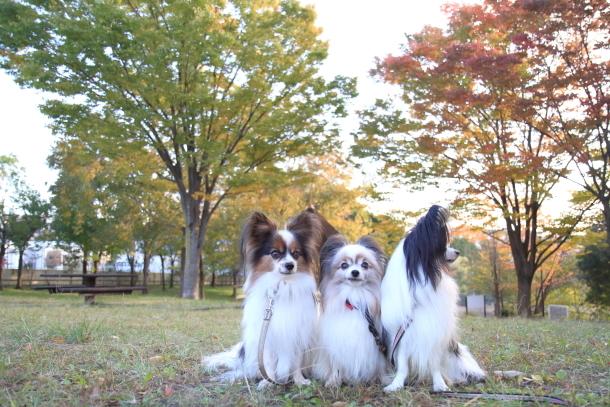 公園秋散歩00029768