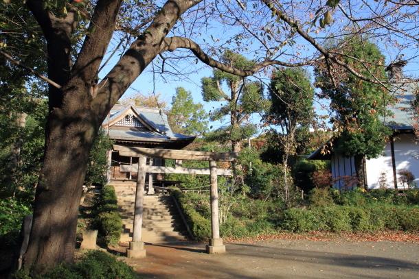 公園秋散歩00029802
