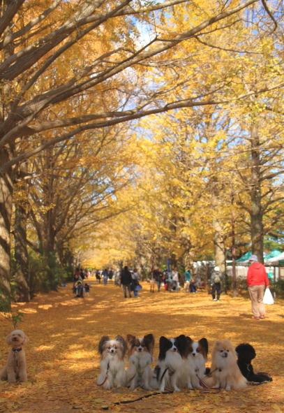 昭和記念公園 小型犬00033484