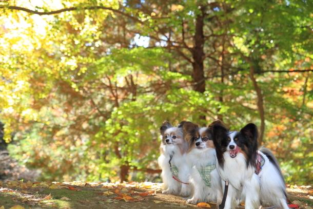 昭和記念公園 小型犬00033440