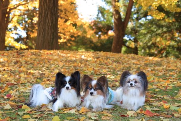 昭和記念公園 小型犬00033454