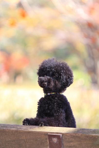 昭和記念公園 小型犬00033465