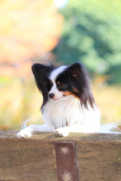 昭和記念公園 小型犬00033469