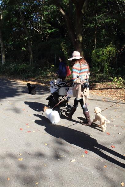 昭和記念公園 小型犬00033473