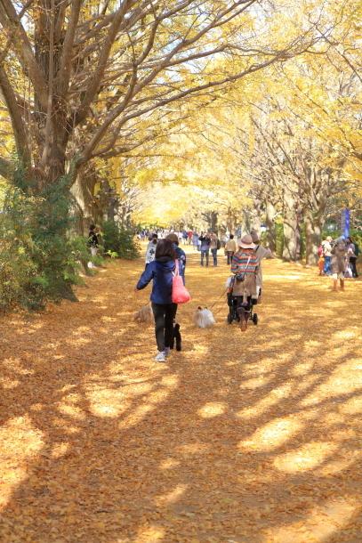 昭和記念公園 小型犬00033486