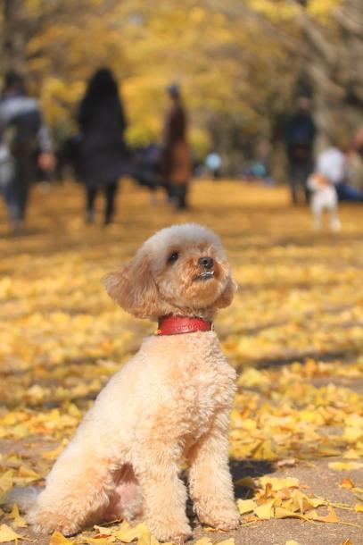 昭和記念公園 小型犬00033491
