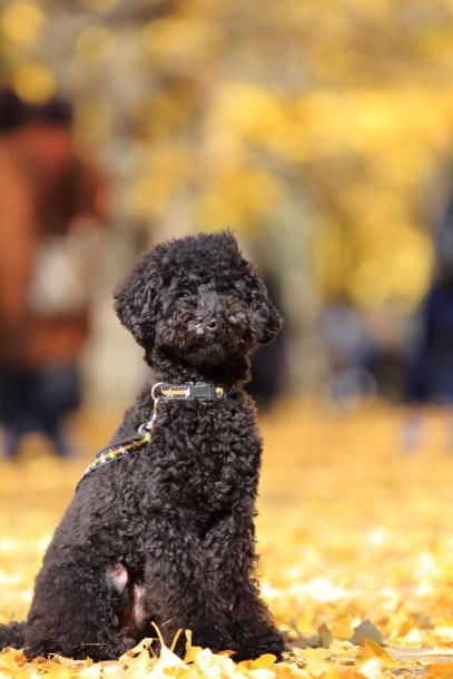 昭和記念公園 小型犬00033495