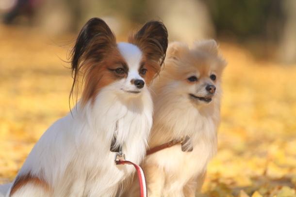 昭和記念公園 小型犬00033497