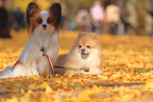 昭和記念公園 小型犬00033503