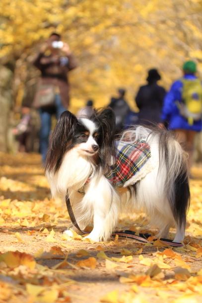 昭和記念公園 小型犬00033507