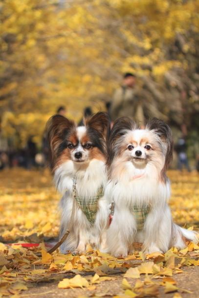 昭和記念公園 小型犬00033490