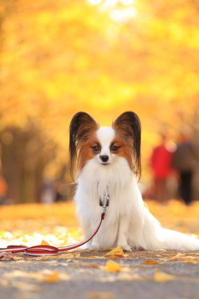 昭和記念公園 小型犬00033553