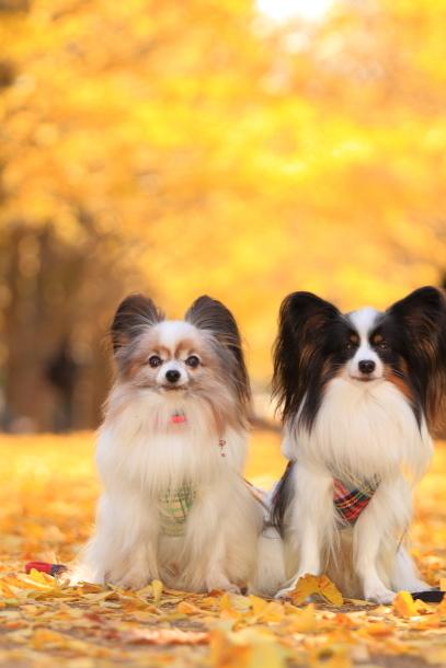 昭和記念公園 小型犬00033558