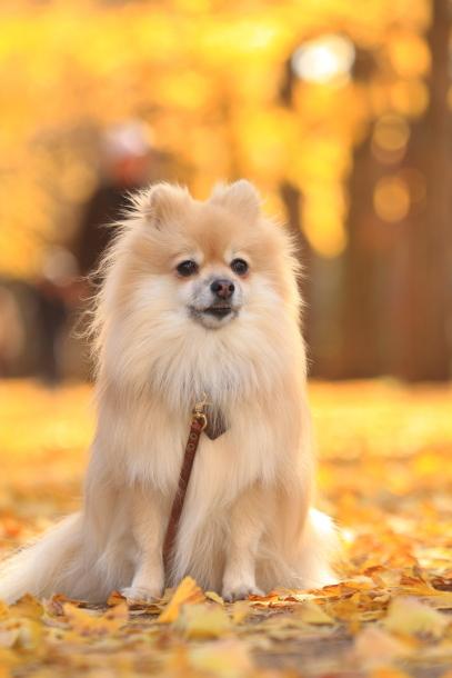 昭和記念公園 小型犬00033561