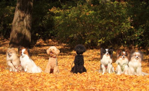 昭和記念公園 小型犬00033532
