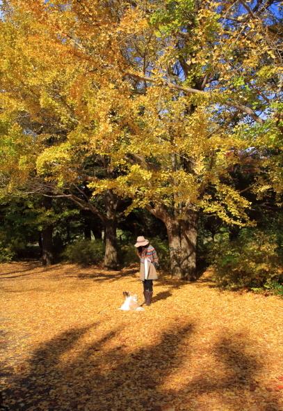 昭和記念公園 小型犬00033544