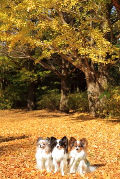 昭和記念公園 小型犬00033540