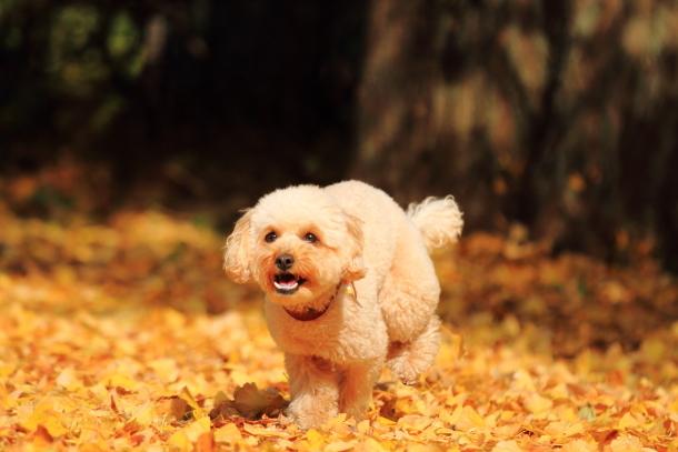 昭和記念公園 小型犬00033530 - コピー