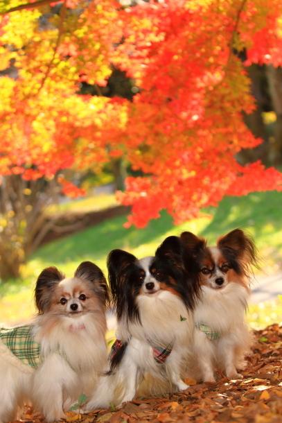 昭和記念公園 小型犬00033587