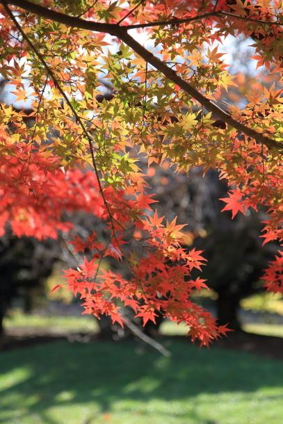 昭和記念公園 小型犬00033590