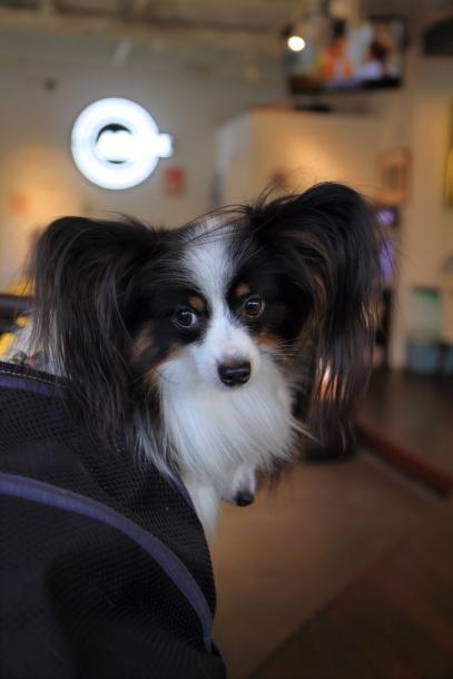 昭和記念公園 小型犬00033594